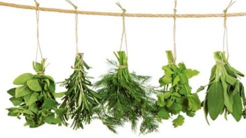 herbales para el estres